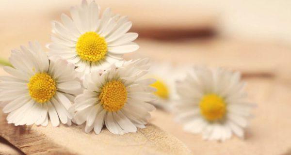 Ý nghĩa các loài hoa màu trắng phổ biến