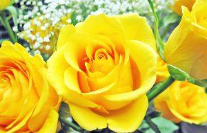 Những loài hoa tượng trưng cho sự thành công nên có trong nhà bạn