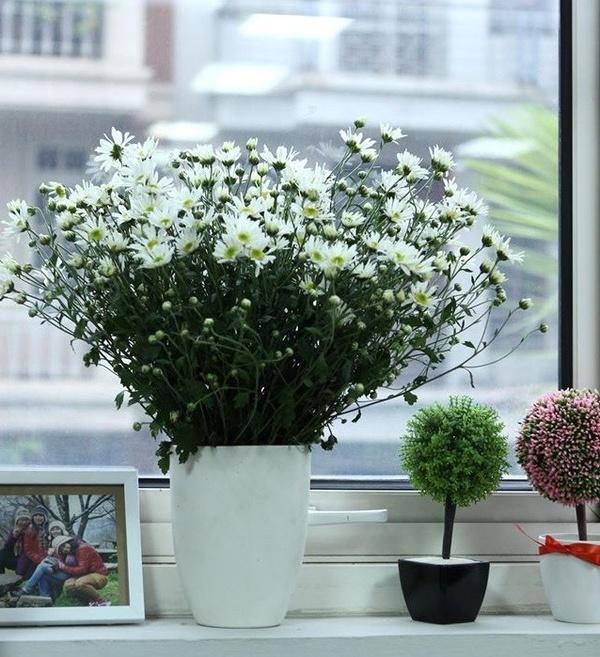 Cách Cắm Hoa Thạch Thảo