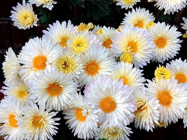 Hoa Nào Hợp Với Các Cung Hoàng Đạo? (Phần 2)