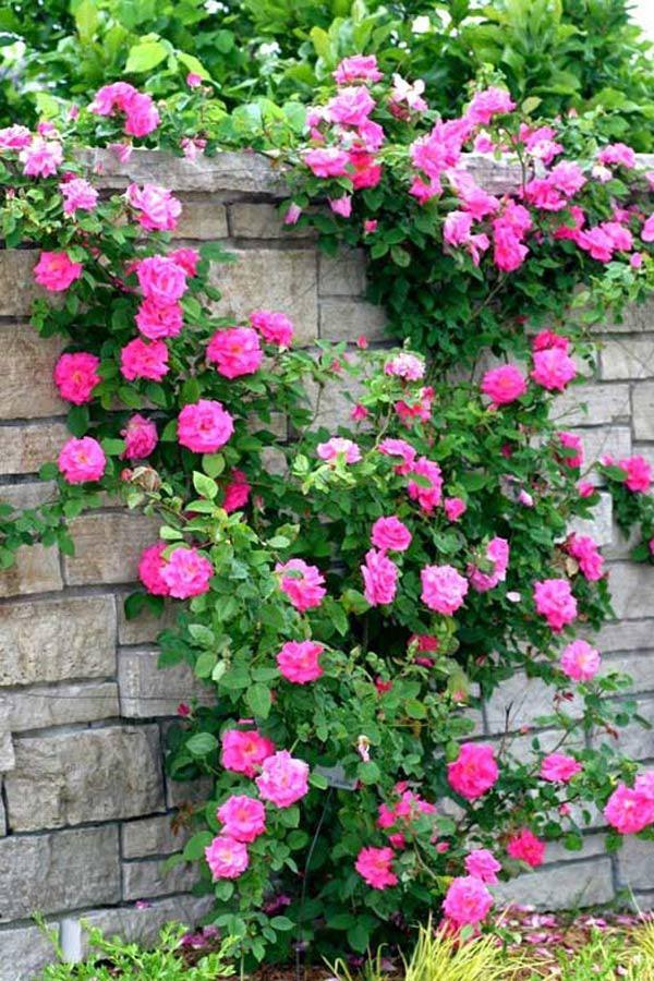 Hoa Gì Dễ Trồng, Nở Quanh Năm?